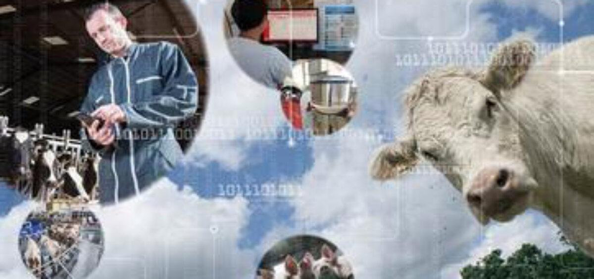 big data estelevage